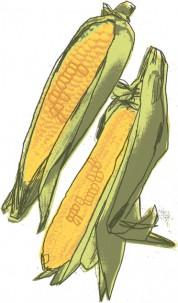 01sweet-corn-2